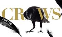 Actu Ciné, Cinéma, Crows Explode, Film, Live Action Movie, Trailer,